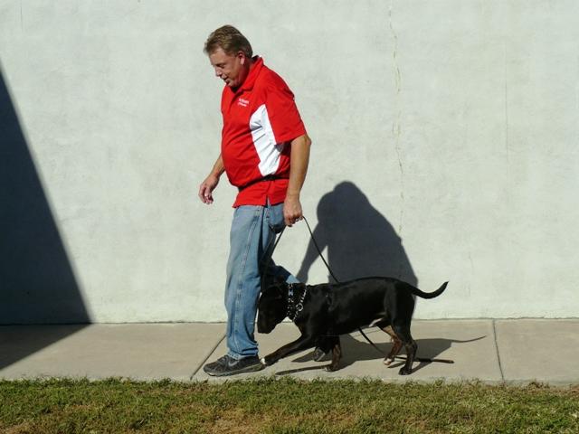 Dog Training Nashville Boarding