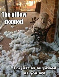 dog versus pillow